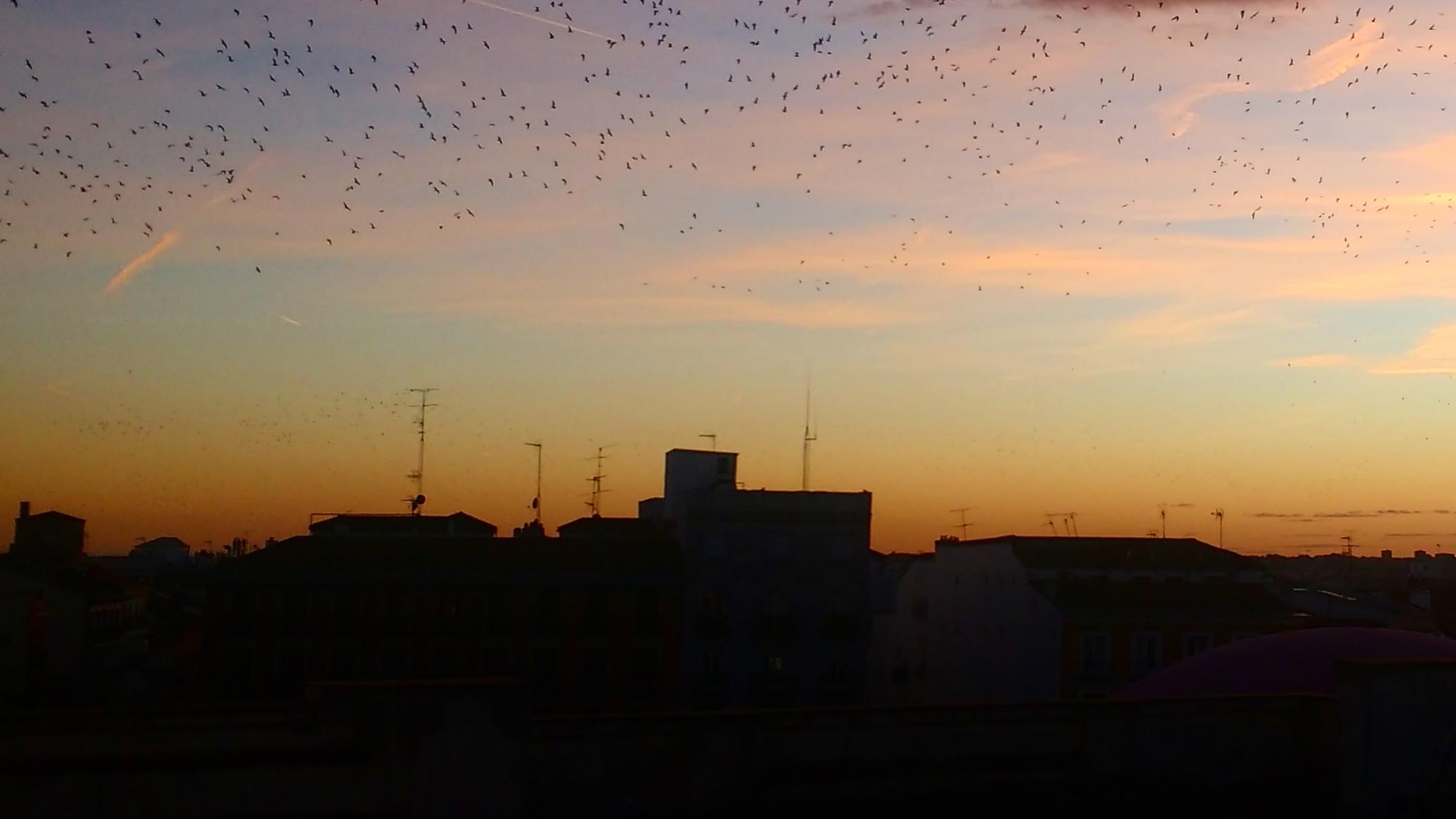 MadridBirds